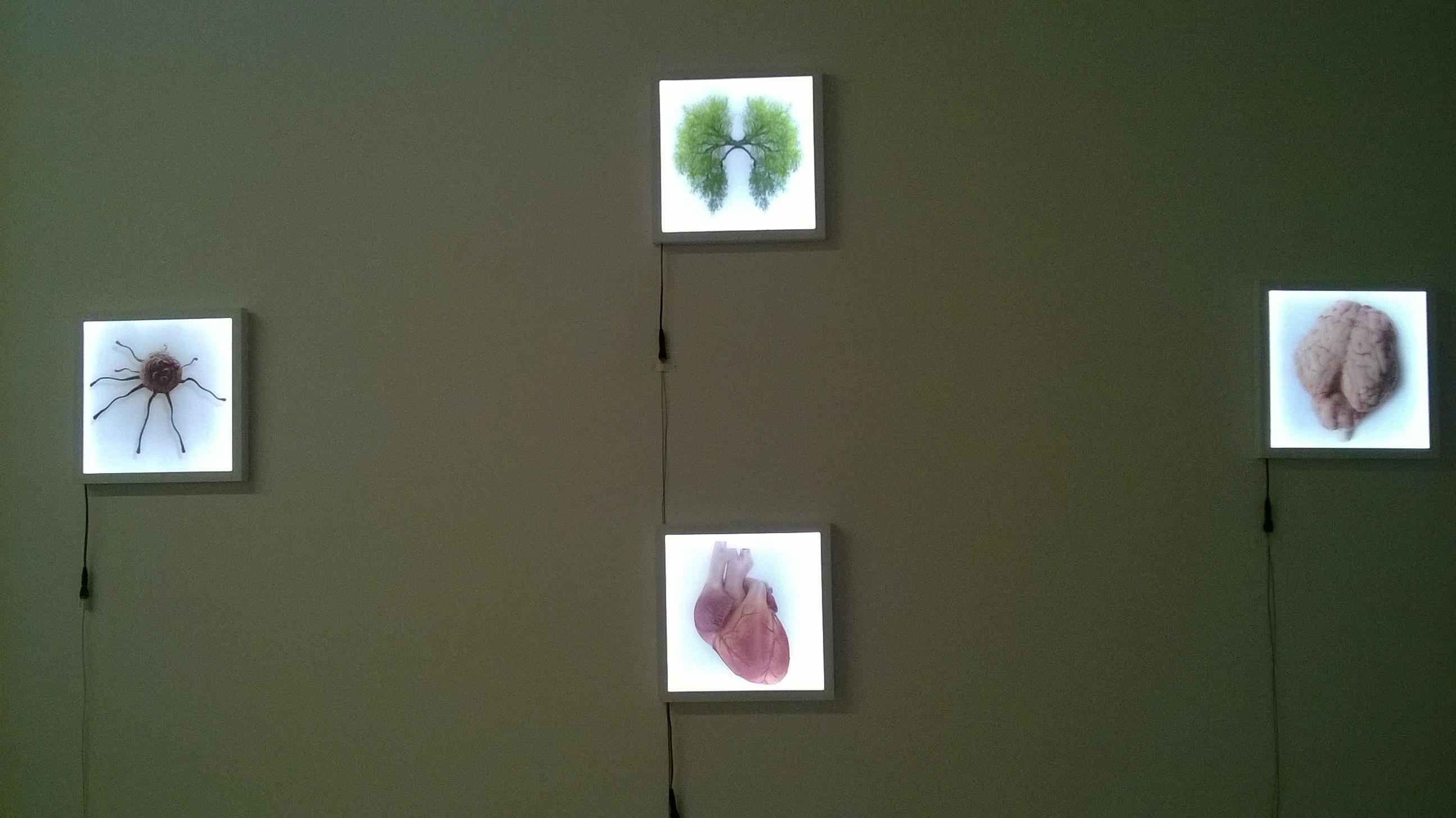foto dell' installazione