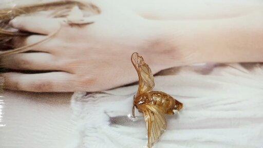 Particolare farfalla resinata